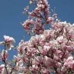 Gartenmöbel – Auswahltipps