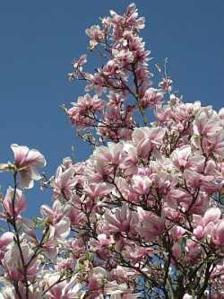 Gartenmöbel unter magnolien